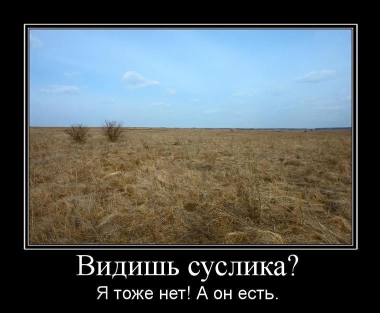 suslik_est.jpg